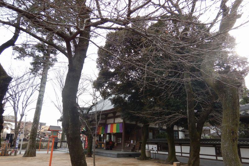 川越・蓮馨寺の桜